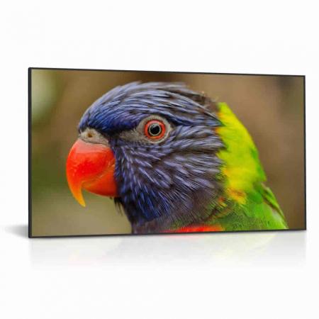 75 Zoll High Brightness Schaufenster Monitor DS751LT4