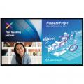 Philips C-Line Meeting-Display 55 Zoll